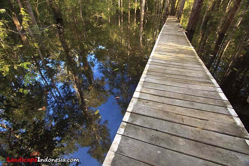 sungai pelaik - Tips Menikmati Keindahan Danau Sentarum
